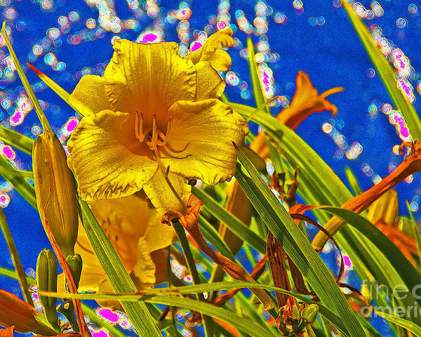 Day Lilies Poster featuring the photograph Day Lilies In The Sky With Diamonds by David Frederick