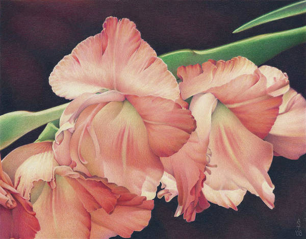 Gladiolas Poster featuring the drawing Daylights Last Dance by Amy S Turner