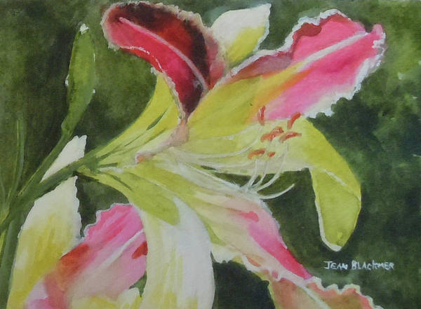 Daylily Poster featuring the painting Daylily Study 1 by Jean Blackmer