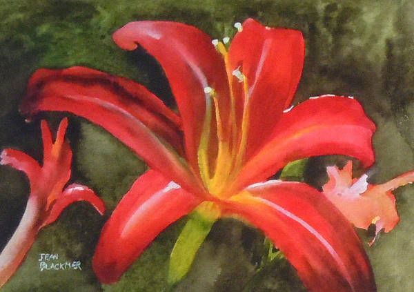 Red Poster featuring the painting Daylily Study IV by Jean Blackmer