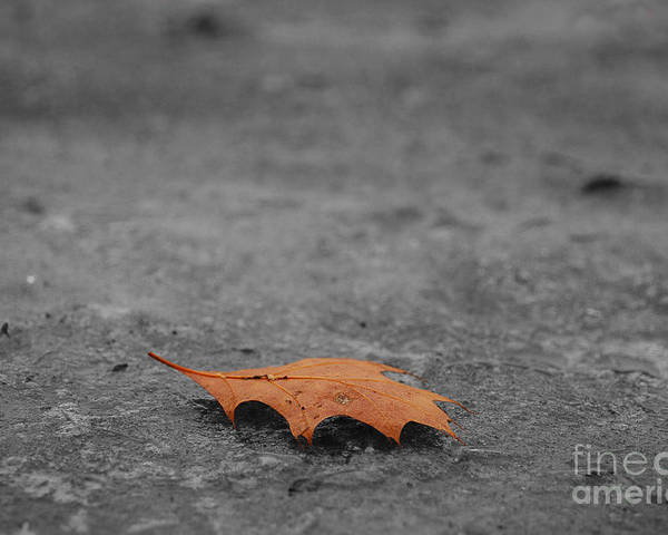 Autumn Poster featuring the photograph Dead Leaf by Evia Nugrahani Koos