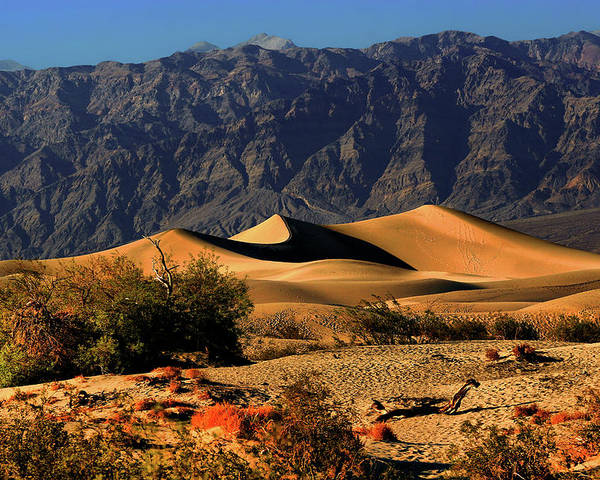 Death Valley National Park Poster featuring the photograph Death Valley's Mesquite Flat Sand Dunes by Christine Till