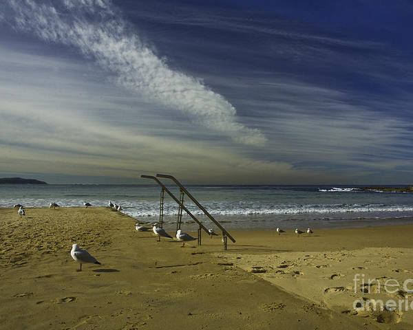 Beach Poster featuring the photograph Dee Why Beach Sydney by Avalon Fine Art Photography