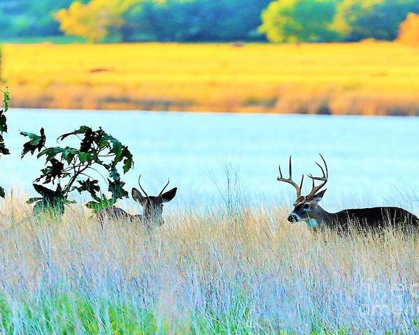 Landscape Poster featuring the photograph Deer At Sunset by Jeff Downs