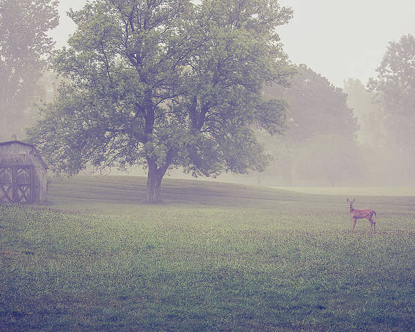 Deer Poster featuring the photograph Deer By Barn On A Foggy Morning by Maxwell Dziku