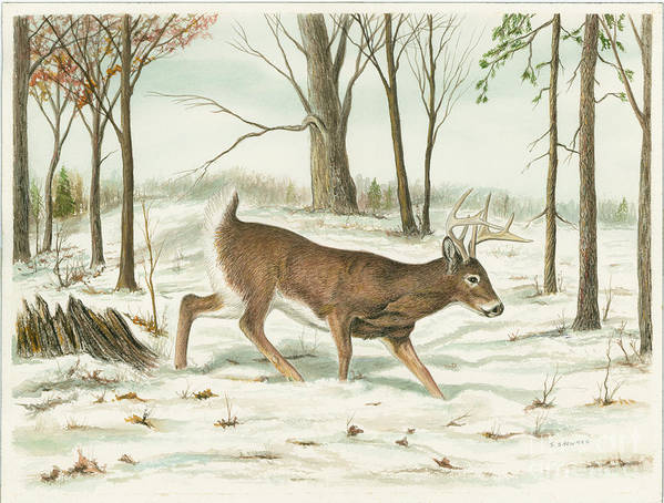Deer Poster featuring the painting Deer In Snow by Samuel Showman