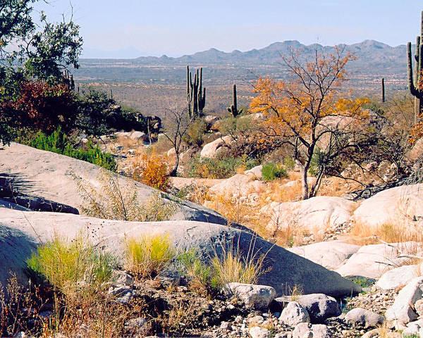 Desert Poster featuring the photograph Desert Autumn by Greg Taylor