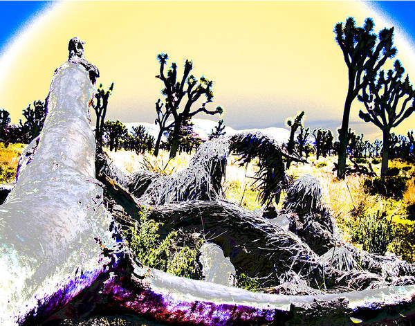 Desert Poster featuring the photograph Desert Landscape - Joshua Tree National Monment by Ann Tracy