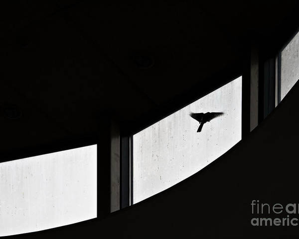Bird Poster featuring the photograph Desire by Vadim Grabbe