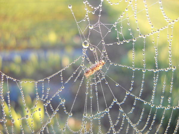Morning Dew Poster featuring the photograph Dew Drops On A Spider Web by Kent Lorentzen