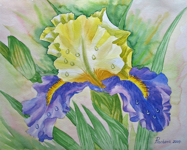 Flowers Poster featuring the painting Dew Drops Upon Iris.2007 by Natalia Piacheva