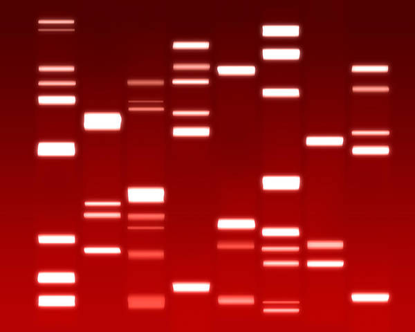 Dna Poster featuring the digital art Dna Red by Michael Tompsett