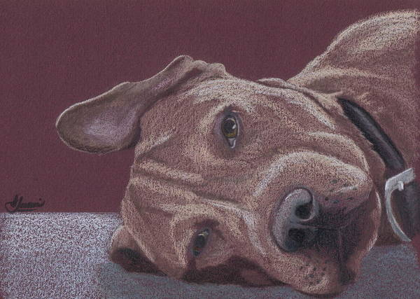Pit Bull Poster featuring the drawing Dog Tired by Stacey Jasmin