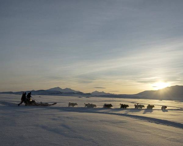 Snow Poster featuring the photograph Dogsledge, Northern Greenland by Louise Murray