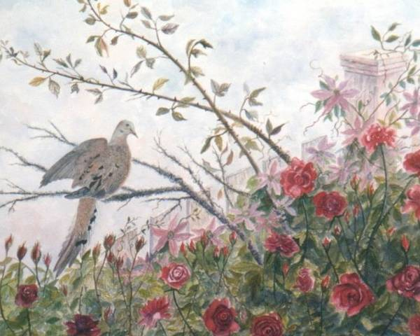 Dove; Roses Poster featuring the painting Dove And Roses by Ben Kiger
