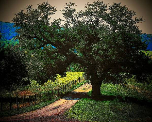 Trees Poster featuring the photograph Down The Lane by Joyce Kimble Smith
