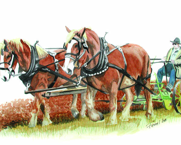 Horses Poster featuring the painting Draft Horses by Ferrel Cordle