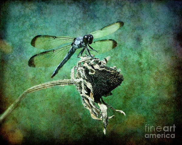 Dragonfly Poster featuring the photograph Dragonfly Art by Sari Sauls