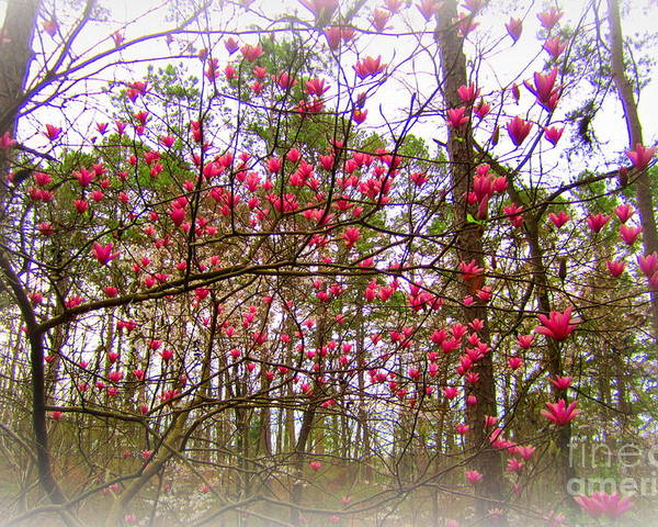 Nature Poster featuring the photograph Dreaming Of Spring by Regina Strehl