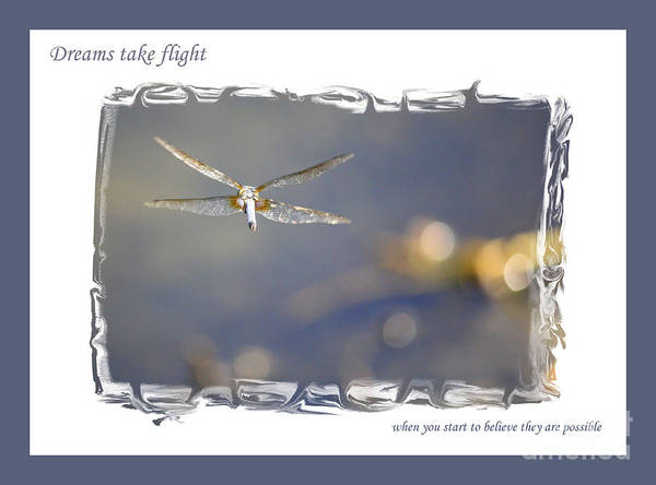 Greeting Cards Poster featuring the photograph Dreams Take Flight Poster Or Card by Carol Groenen