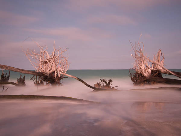 Driftwood Poster featuring the photograph Driftwood 4121889 by Rolf Bertram