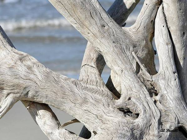 Driftwood Poster featuring the photograph Driftwood Detail by Al Powell Photography USA