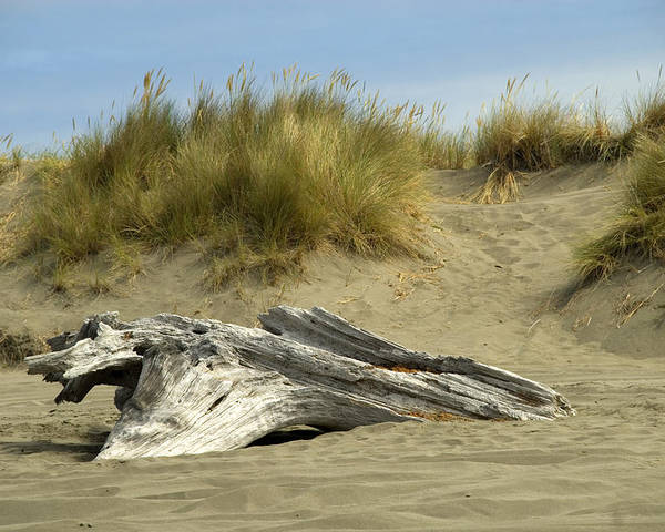 Wood Poster featuring the photograph Driftwood by Jessica Wakefield
