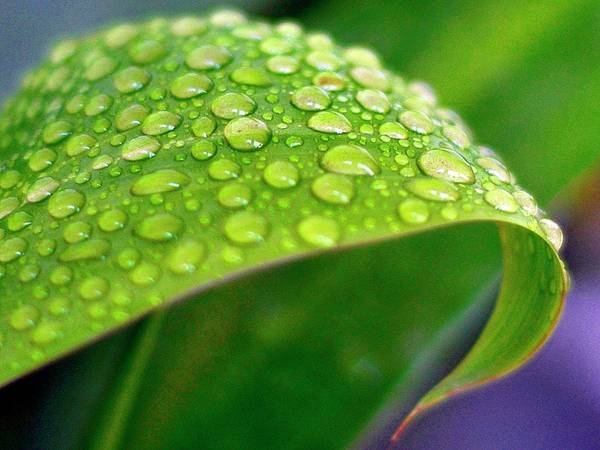 Poster featuring the photograph Droplets Of Hope by Nirmal Kumar