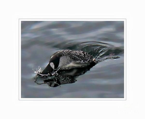 Duck Poster featuring the photograph Ducking by Gail Bridger