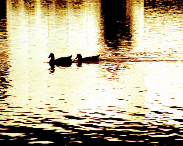 Silhouettes Poster featuring the photograph Ducks On Pond 1 by Steve Ohlsen