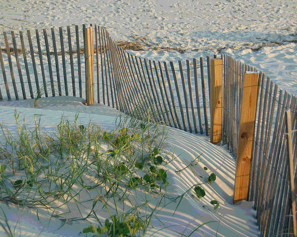 Sea Fence Poster featuring the photograph Dune Fence by Suzanne Gaff