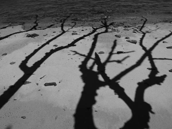 Shadows Poster featuring the photograph Dunk Island Australia 174 by Per Lidvall