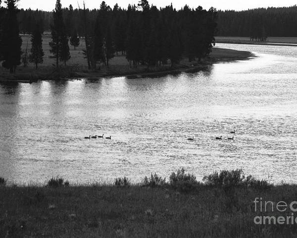 Wildlife Poster featuring the photograph Dusk at the Yellowstone River by Susan Chandler