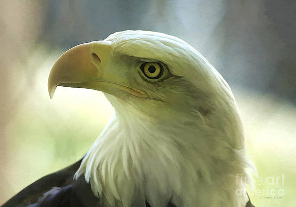 Eagle Poster featuring the photograph Eagle Majesty by Deborah Benoit