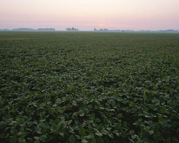 Natural Forces And Phenomena Poster featuring the photograph Early Morning Mist Over Soybean Fields by Brian Gordon Green