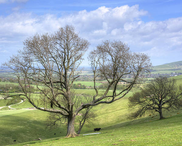 Grazing Poster featuring the photograph Early Spring On Steryning Bowl by Hazy Apple