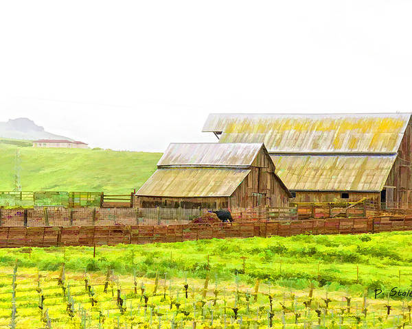 Vineyard Poster featuring the digital art Edna Valley Ranch by Patricia Stalter