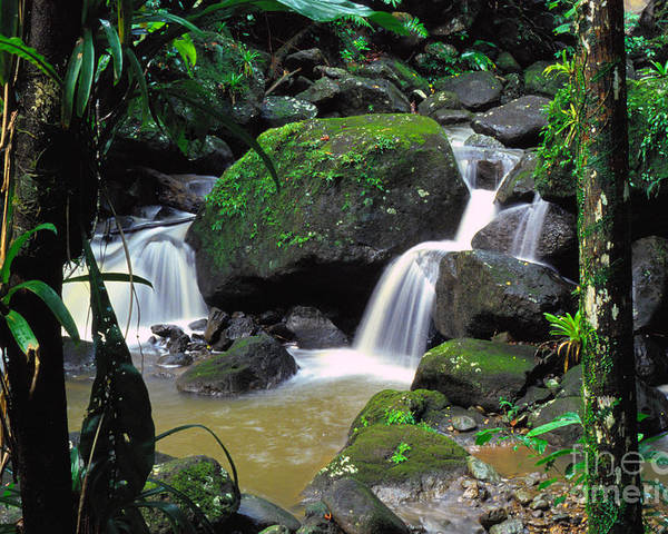 Puerto Rico Poster featuring the photograph El Yunque National Forest Waterfall by Thomas R Fletcher