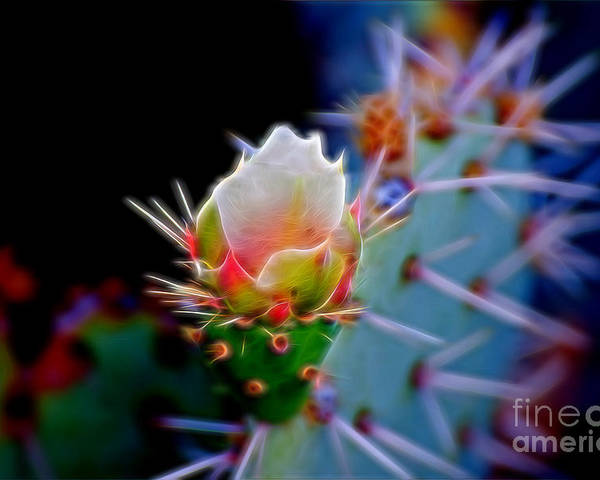 Cactus Flowers Poster featuring the photograph Electric Cactus Rose by Berta Keeney