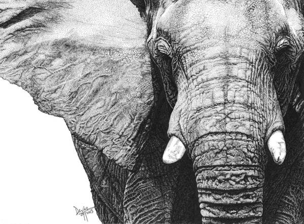 Elephant Poster featuring the drawing Elephant by Deven Singh Kshetrimayum