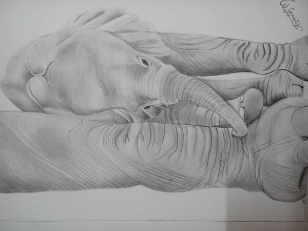 Poster featuring the drawing Elephant Love by Anirudh Maheshwari