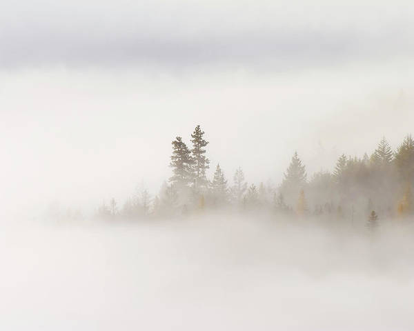 Fog Poster featuring the photograph Emergence by Mike Dawson
