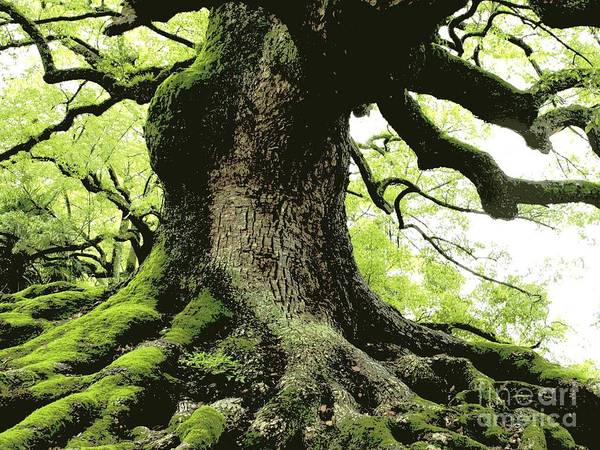 Tree Poster featuring the photograph Endurance In Japan - Digital Art by Carol Groenen
