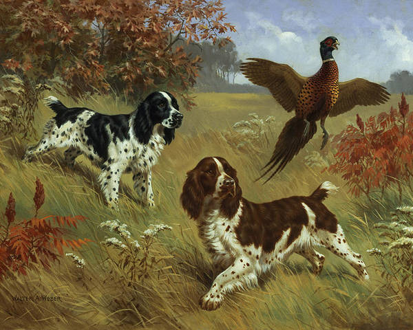 Illustration Poster featuring the photograph Energetic English Springer Spaniels by Walter A. Weber