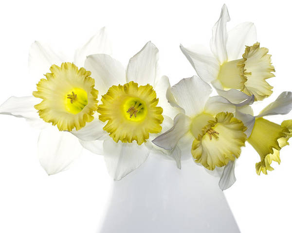 Daffodils Poster featuring the photograph Ephifany by Rebecca Cozart