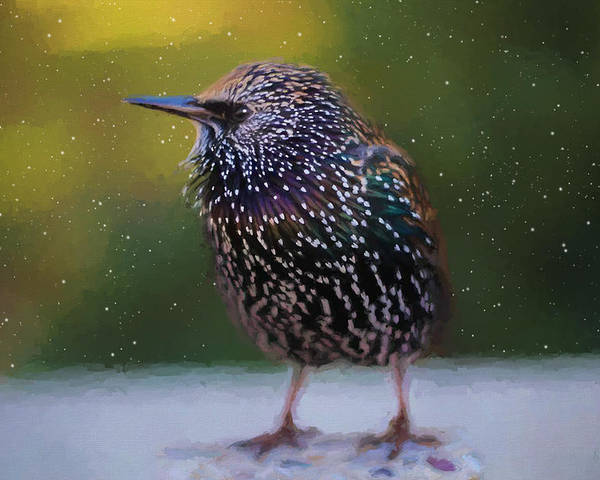 Starling Poster featuring the painting European Starling - Painted by Ericamaxine Price