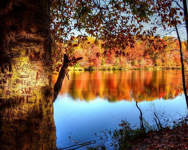 Fall Poster featuring the photograph Fall At Lake by Ronda Ryan