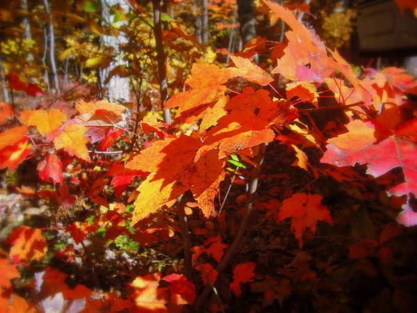 Red Poster featuring the photograph Fall Color 2 by John Julio