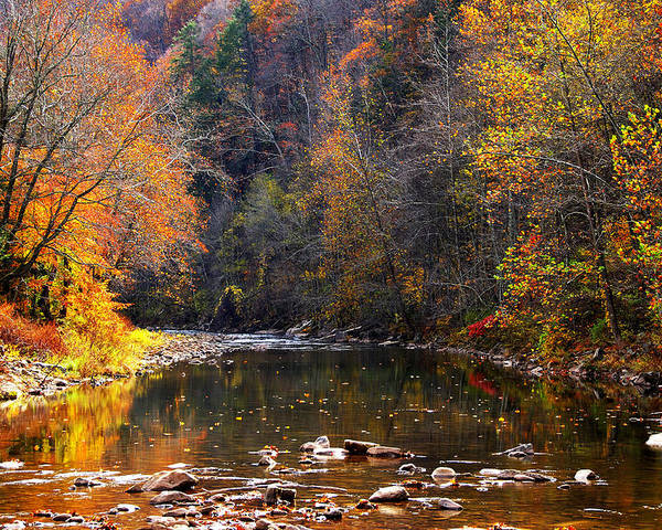 Autumn Poster featuring the photograph Fall Color Elk River by Thomas R Fletcher
