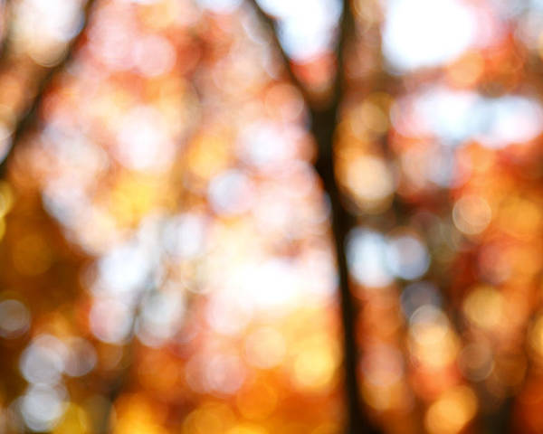 Abstract Poster featuring the photograph Fall Colors by Les Cunliffe